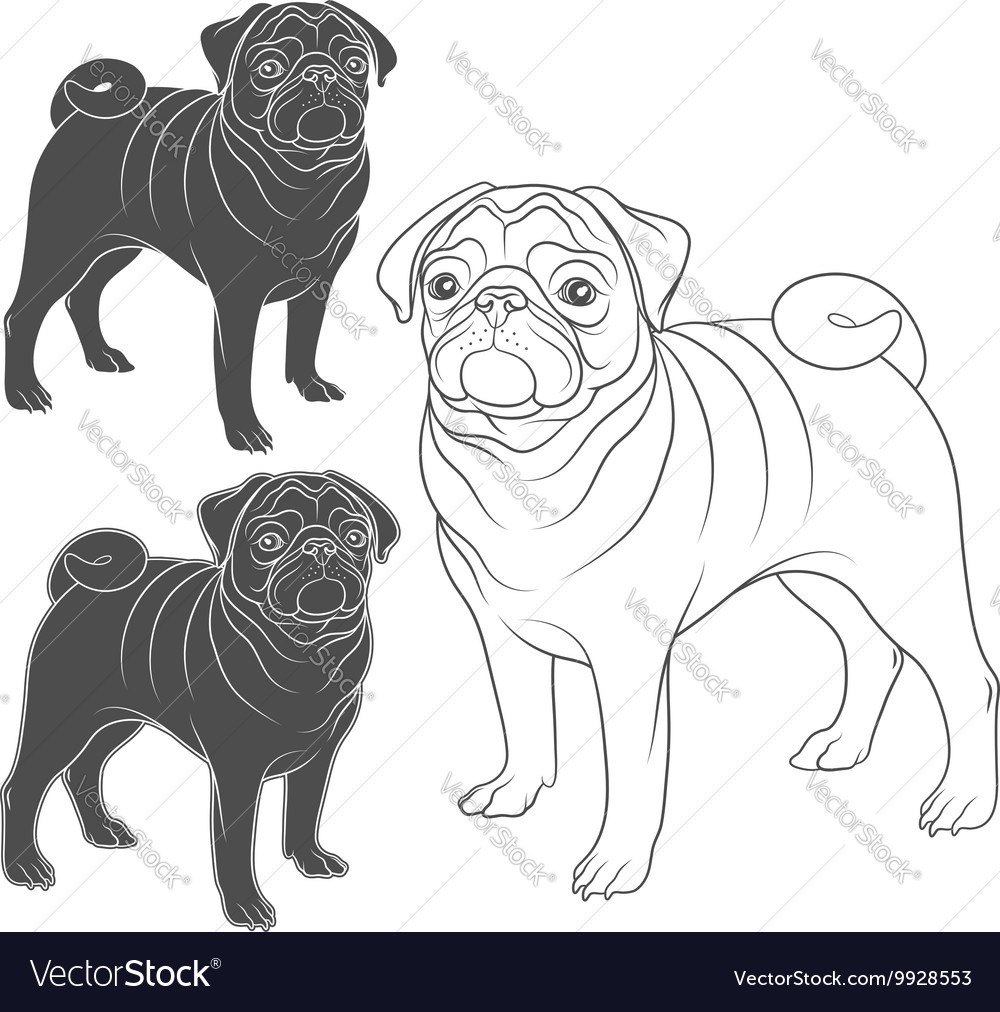 Set of images of pug vector
