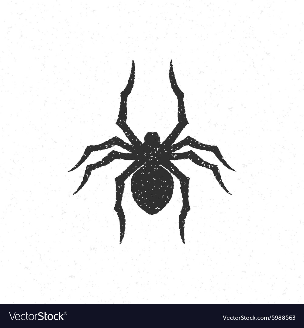 Spider hand drawn vector