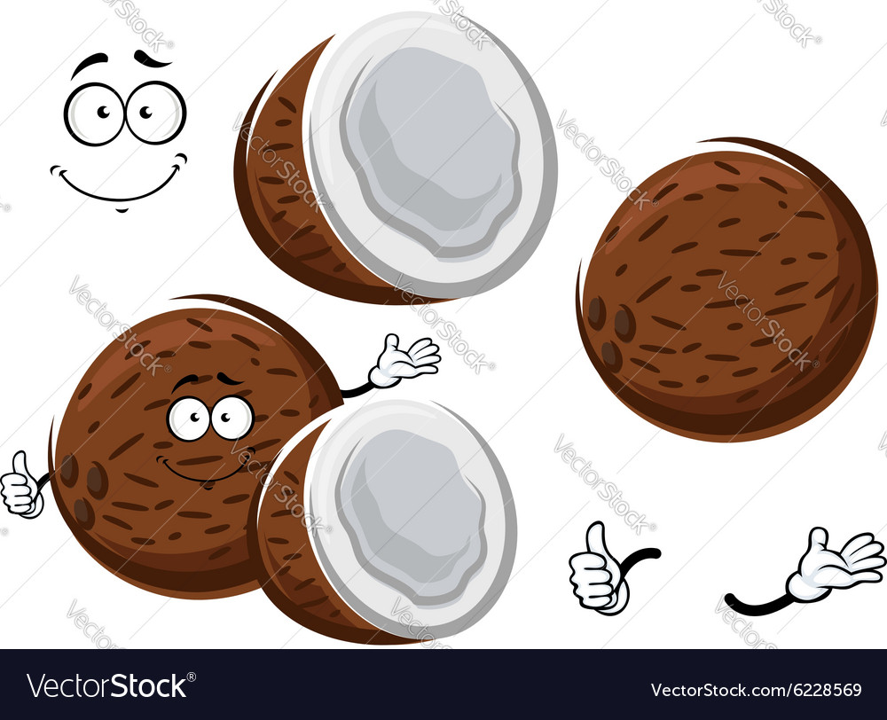Cartoon tropical fresh coconut fruit vector