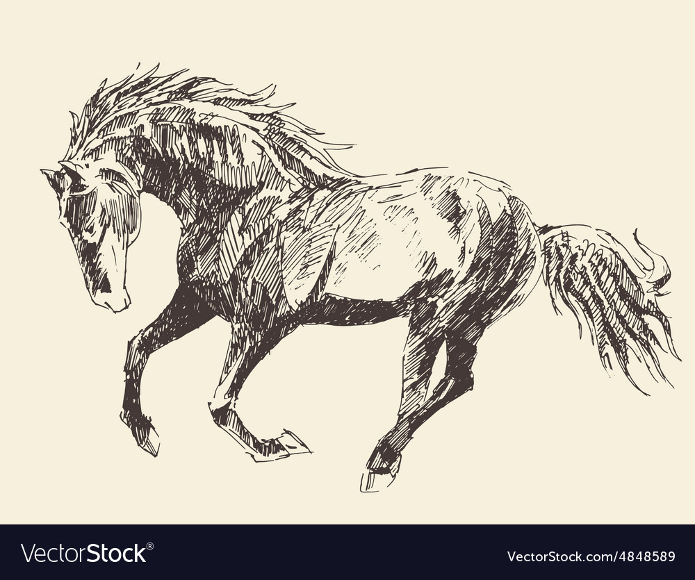 Horse vintage engraved hand drawn vector