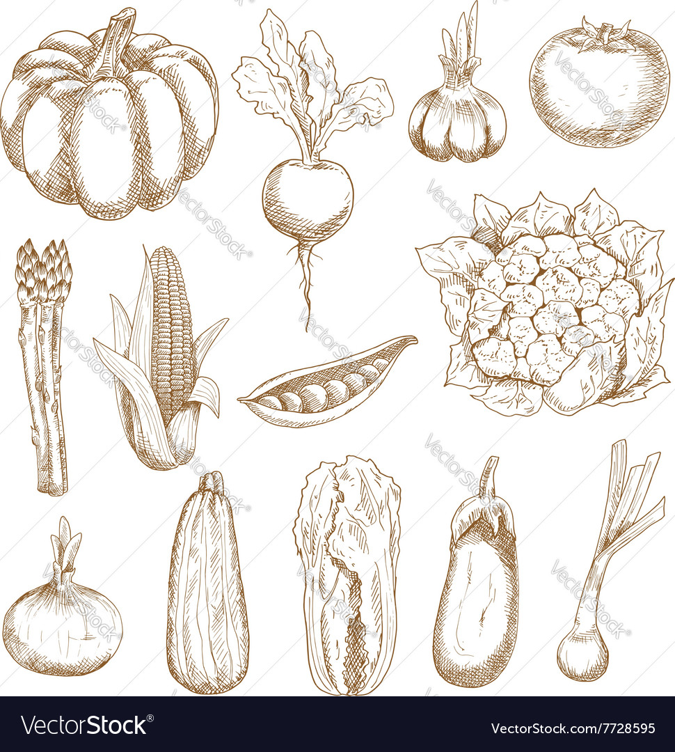 Farm vegetables sketches in vintage style vector