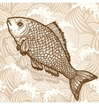 Sea fish vector image vector image