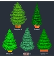 Set of potted christmas tree like fir or vector image