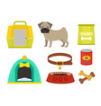 pug dog playing elements set vector image