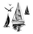 sea yachts flying seagulls vector image