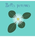 flat stylish background plant Bellis vector image