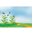 A corn field at the hill with butterflies vector image