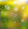 water drops on a spider web vector image