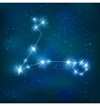 Pisces Realistic Zodiacal Constellation vector image
