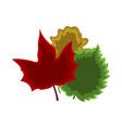 set of leaf icon cartoon vector image