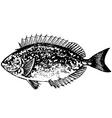 tropical fish signups vector image