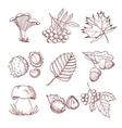 Hand Drawn Autumn Set vector image