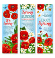 spring flower field for greeting banner template vector image