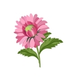 Aster Hand Drawn Realistic vector image