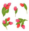 tulip3 vector image vector image