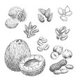 nuts grain and seeds sketch icons vector image