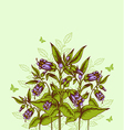 background with bellflower vector image vector image
