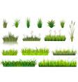 grass grassland or grassplot and green vector image