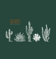 stock set of hand drawn cactus vector image