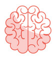 brain halves flat vector image
