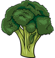 broccoli vegetable cartoon vector image