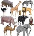 wild animals from African continent vector image