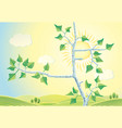 sunny rural landscape with branches birch trees vector image