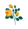 Yellow Rose Hand Drawn Realistic vector image