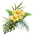 Canna flowers vector image vector image