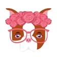 cute bulldog isolated icon vector image