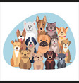 concept of purebred dogs sitting and looking flat vector image