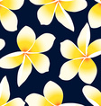 Yellow tropical Frangipani Plumeria floral vector image