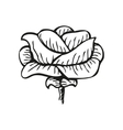 Rose in tattoo style hand drawn flower vector image