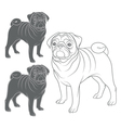 Set of images of pug vector image