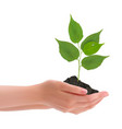 Hand with leaves vector image
