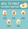 how to make the perfect boiled eggs vector image
