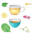 tea glass vector image vector image