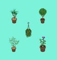 isometric houseplant set of blossom houseplant vector image