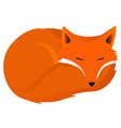 fox curled up vector image
