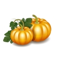 Two orange autumn pumpkins with green leaves vector image