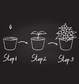 growing phases of potted plant vector image
