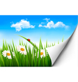 Spring background with flowers grass and a ladybug vector image vector image