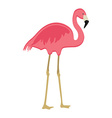 Pink flaming bird vector image
