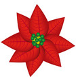 Realistic color poinsettia christmas flowers vector image