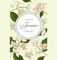 Jasmine flowers banner vector image