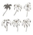 Palm tree set colorless vector image