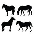 detailed horse silhouettes vector image