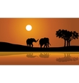 African Elephants at Sunset africana vector image