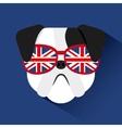 english bulldog design vector image