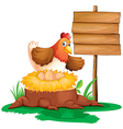 A hen laying eggs vector image vector image